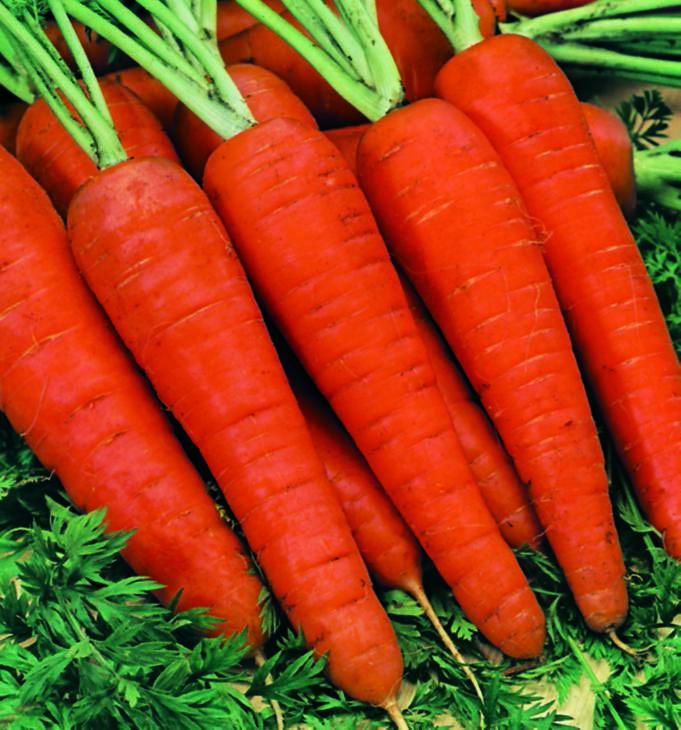 Carrot Danvers Half Long