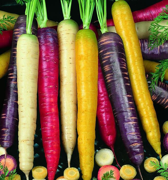 Carrot Rainbow Mixed Colors