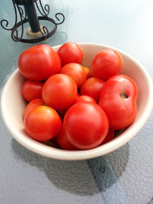 earlies-in-bowl