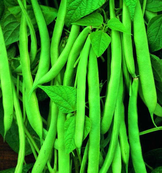 Bean Stringless