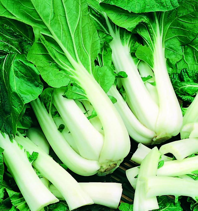 Chinese Cabbage Pac Choy