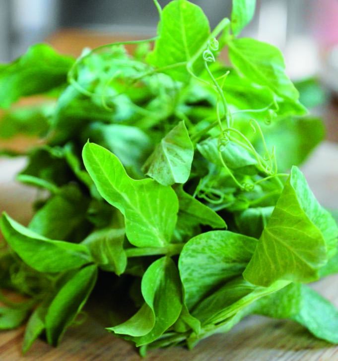 Micro-Greens Epicurean Pea Tendrils