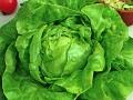 Lettuce Butterchrunch