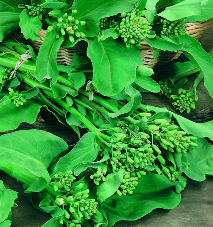 Broccoli Fall Raab