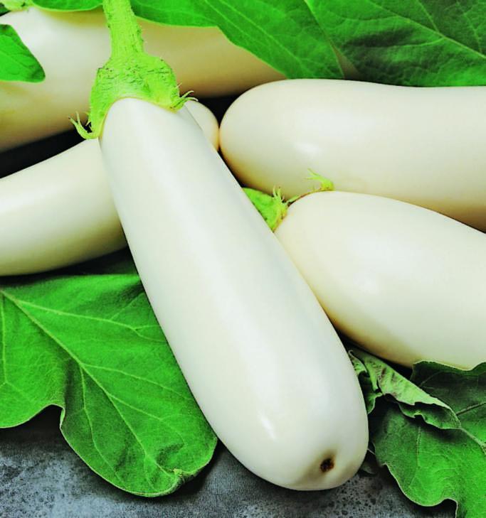 Eggplant Casper
