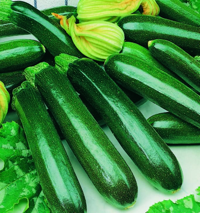 Squash Zucchini Dark Green