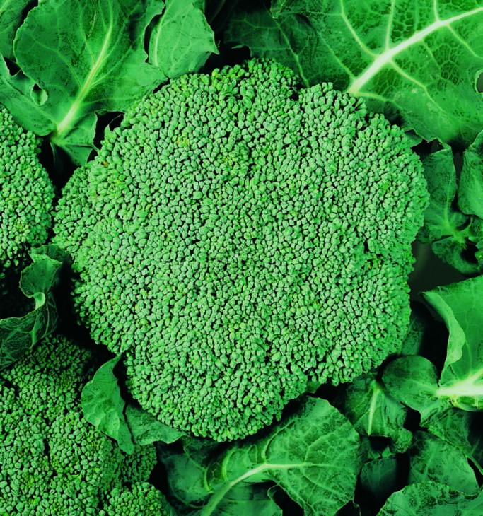 Broccoli Waltham 29