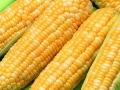 Corn Butter & Sugar
