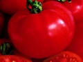 Tomato Best Boy