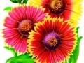 Blanket Flower Mixed Colors